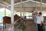 Quỹ Hỗ trợ nông dân tỉnh: Đồng hành cùng nông dân