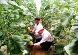 Hội Nông dân huyện Phú Giáo: Tích cực hỗ trợ nông dân phát triển kinh tế