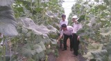 Phát triển nông nghiệp gắn kết với du lịch