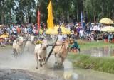 Nhãn hàng Nước tăng lực Number 1: Đồng hành cùng hội đua bò Bảy Núi