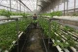 Lực lượng vũ trang huyện Phú Giáo: Xây dựng doanh trại chính quy xanh - sạch - đẹp gắn với tăng gia sản xuất