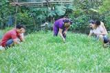 Các cấp Hội LHPN: Nhân rộng những mô hình vệ sinh an toàn thực phẩm