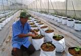Nhiều nông dân lựa chọn mô hình nông nghiệp công nghệ cao