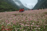 Buckwheat flower festival in Ha Giang promises diverse activities