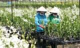 Hiệu quả từ việc chuyển đổi cây trồng