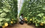 Phát triển du lịch sinh thái gắn với nông nghiệp công nghệ cao