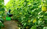 Giải pháp tiêu thụ nông sản ổn định