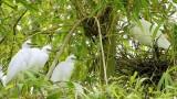 努力保护金瓯市内独特的人工飞鸟公园