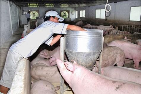 Phòng Tài nguyên và Môi trường huyện Bàu Bàng: Đẩy mạnh truyền thông bảo vệ môi trường trong chăn nuôi