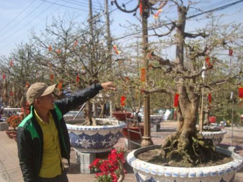 TX.Thuận An: Nhộn nhịp Hội chợ hoa xuân
