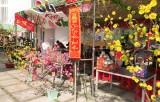 Trường Trung - Tiểu học Phan Chu Trinh: Tạo không khí vui Xuân, đón Tết cho học sinh