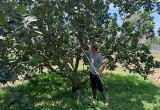 Nông nghiệp công nghệ cao của Bắc Tân Uyên phát triển đúng hướng