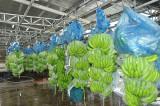 Phối hợp, thúc đẩy phát triển ngành nông nghiệp
