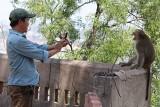 Cần sớm di dời đàn khỉ ra khỏi khu vực núi Châu Thới