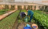 Ngành nông nghiệp: Chủ động ứng phó với thời tiết nắng nóng