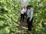 Ban Kinh tế - Ngân sách HĐND tỉnh: Giám sát hai đơn vị sản xuất nông nghiệp công nghệ cao tại huyện Phú Giáo