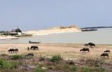 Công tác quản lý, khai thác khoáng sản ở hồ Dầu Tiếng: Chuyển biến tích cực