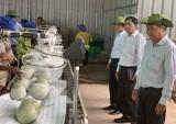 Vốn hỗ trợ nông nghiệp công nghệ cao: Phát huy hiệu quả