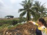 Vụ tố cáo của bà Lê Thị Hạnh (ngụ phường Tân Phước Khánh, TX.Tân Uyên): Công an tỉnh đang xác minh làm rõ
