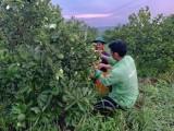 Giải pháp đẩy mạnh phát triển nông nghiệp hữu cơ