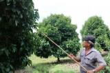 Hiệu quả từ tái cơ cấu nông nghiệp