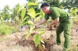 """""""为一个绿色的平阳省""""植树活动"""