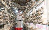 Bàu Bàng: Hiệu quả từ phong trào nông dân sản xuất, kinh doanh giỏi