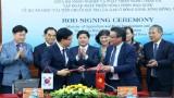 韩国帮助越南改善稻米价值链