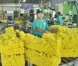 Xuất khẩu mủ cao su tăng 6,4%