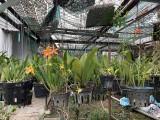 Chuyện về một nghệ nhân trồng lan