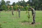 Sư Đoàn 7: Trồng cây gây rừng, bảo vệ môi trường