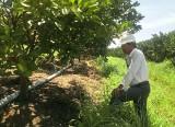 Nâng chất ngành nông nghiệp