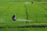 Thailand ceases licensing agricultural chemicals