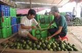 Nông dân phát huy vai trò trong xây dựng nông thôn mới