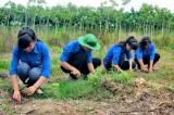 Đoàn thanh niên Nông trường Cao su Đoàn Văn Tiến: Gắn kết hoạt động Đoàn và phong trào lao động sản xuất