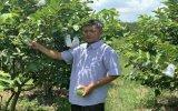 Phát triển nông nghiệp công nghệ cao gắn với thị trường