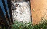 Cần xử lý dứt điểm cơ sở thu mua mủ cao su gây ô nhiễm