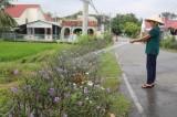 Những con đường hoa  trên nông thôn mới