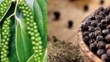 越南加大对欧洲市场的胡椒出口力度