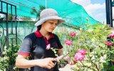 Những vườn hồng trăm triệu