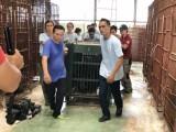 Giải cứu 6 cá thể gấu ngựa nuôi nhốt trong trang trại