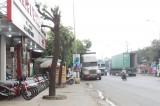 TX.Thuận An: Cần kiên quyết xử lý hành vi xâm hại cây xanh