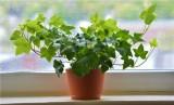Loại cây xanh giúp thanh lọc không khí nên trồng trong nhà