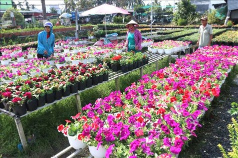 Dong Thap enjoys boom in agrotourism