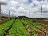 Phát triển nông nghiệp sạch: Cần sự chung tay