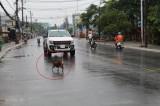 TX.Thuận An: Chấn chỉnh tình trạng chó thả rông