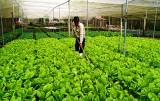 Xã Vĩnh Hòa: Tích cực hỗ trợ nông dân phát triển kinh tế