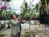 Nông dân huyện Phú Giáo: Tích cực thi đua sản xuất, kinh doanh giỏi