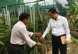 Chú trọng phát triển nông nghiệp kỹ thuật cao