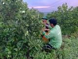 Phát triển nông nghiệp gắn với thị trường
